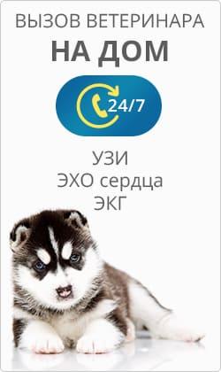 Ветеринар вакансии москва